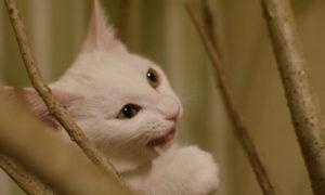 猫と植物の共生は難しい
